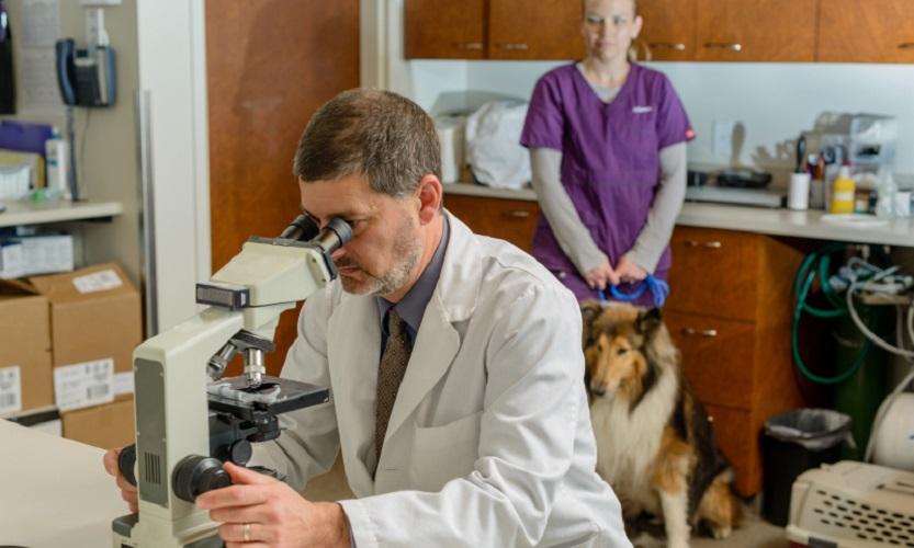 Ветеринарно-санитарная экспертиза